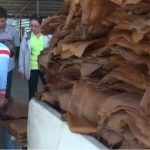 PM assigns Agriculture Ministry to tackle rubber price issue